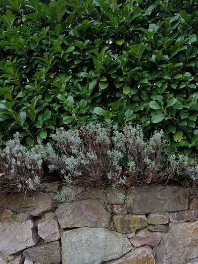 Wall Textured  Backgrounds Brick Wall Plant Grass Green Color