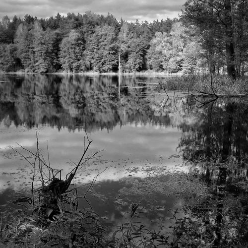 Tree Lake Water Non-urban Scene Nature Beauty In Nature Forest Lakeshore Reflection Lake Awesome Bw_photooftheday Bnw_planet 1415mobilephotographers Mobile_art Bw_divine No People Mazury Poland Artystycznapodroz Lubiepolske Bnw_collection Bw_lover Bwn_globe