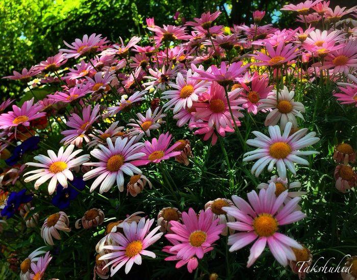 at Mt.Hiei garden museum Flowerporn Flower Collection Flowers EyeEm Nature Lover