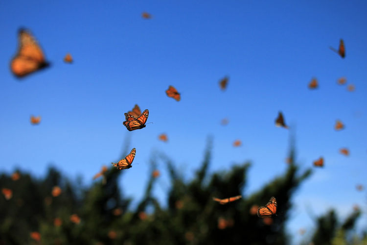 Close-up of butterflies flying against blue sky
