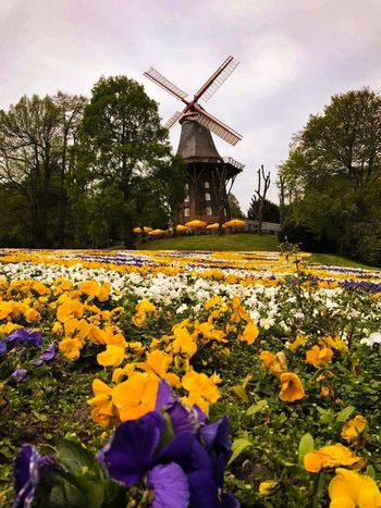 Nature Bremen Wind Power Wind Turbine Environmental Conservation Flower Traditional Windmill Field Nature Sky Beauty In Nature Grass Flowers