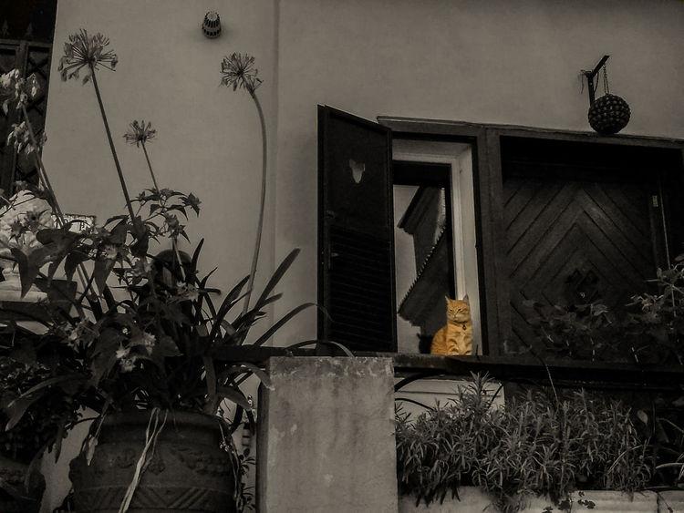 Cat Gato Gatto Gattidiroma Gatosderoma Catsofrome Gatos De Roma Gatti Di Roma Cats Of Rome Huawei Huawei-P9 P9 Huawei Phonetography Lightroom Smartphonetography