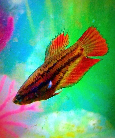 Fish Photography Betta Fish Betta Lovers Bettafishcommunity Bettafish Babybetta