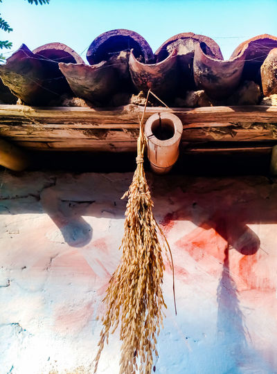 during Paddy harvest local people hang Paddy seed like these on their house roof. it's a tradition people follow for better harvest and good crops Paddy Seeds House Roof Rural Scene No People Day Outdoors Cloud - Sky Arid Climate Nature Close-up