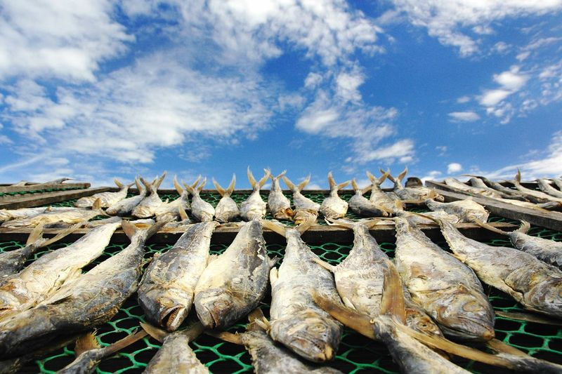 Salted fish dries on net under blue sky Dried Fish  Blue Sky Blue Sky And White Clouds Agriculture Preservation Fishing Industry Net Salted Fish Cloud - Sky Sky Day Nature No People Large Group Of Objects Fishing Industry Food Seafood Abundance Low Angle View Fishing Outdoors In A Row Fish Blue