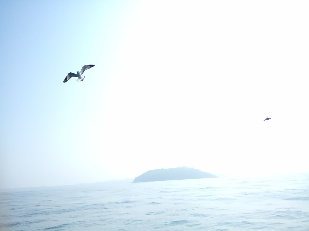 bird, flying, animals in the wild, animal themes, mid-air, one animal, spread wings, animal wildlife, sea, nature, beauty in nature, clear sky, seagull, water, outdoors, wildlife, day, waterfront, scenics, sea bird, tranquil scene, motion, no people, tranquility, horizon over water, sky