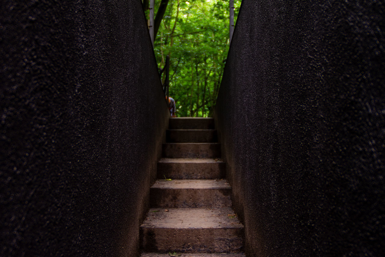 LOW ANGLE VIEW OF STAIRCASE AMIDST TREES