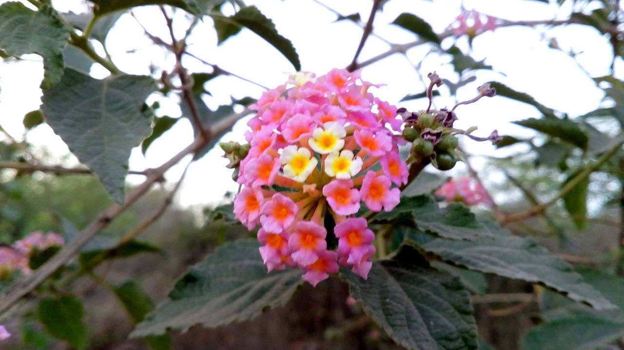 flower, beauty in nature, petal, growth, fragility, freshness, nature, pink color, flower head, day, no people, outdoors, blooming, focus on foreground, plant, close-up