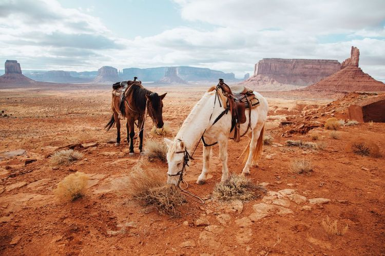 Horses grazing at monument valley against sky