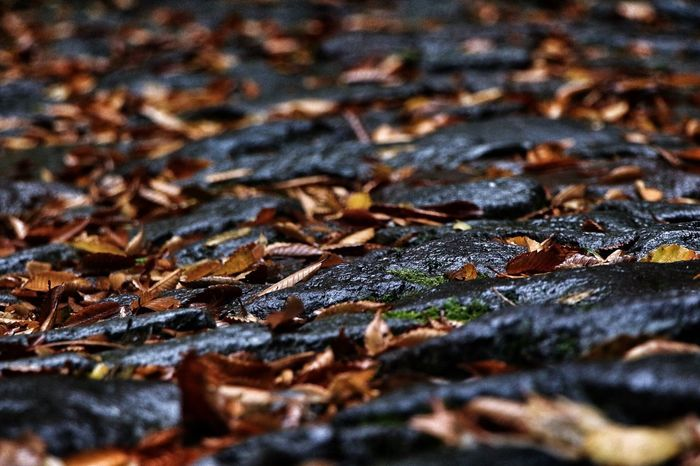 Autumn Leaf Flagstone Path Rainy Days Selective Focus Close-up Backgrounds Maple Textured  Outdoors No People Nature