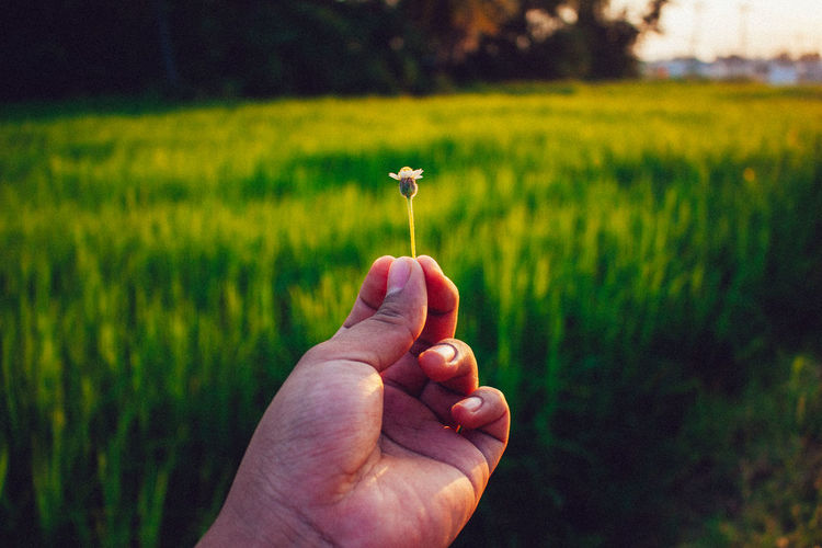 Hand Human Hand Human Body Part Plant Holding Flower One Person Real People Field Land Focus On Foreground Flowering Plant Freshness Fragility Body Part Nature Vulnerability  Personal Perspective Green Color Growth Finger Outdoors