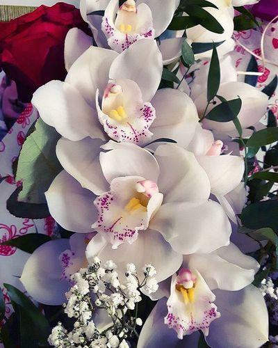 Le mie preferite 🌼 Orchidee Bianche White Orchid Orchids Orchidea Flowerstagram Flower Flowerslovers Flowers Flowersofinstagram Flowersoftheday Nature Flowery Flower