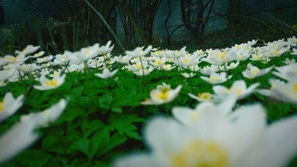 Naturelovers Taking Photos Nature Photography Nature Nature_perfection Igers Iger Iggermany Igbest EyeEm Best Shots Samsungphotography Spring Igsuper_shotz Iggers Spring Flowers