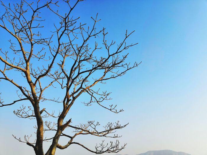 Bird Clear Sky