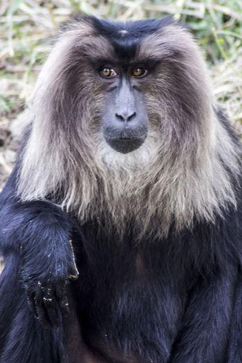 Close-up portrait of black labrador