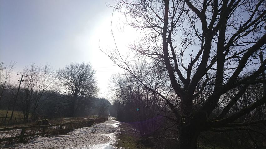 Thaw Winter Forest Footpath Countryside Rural Beauty In Nature Trees Sky Dramatic Sky Cold