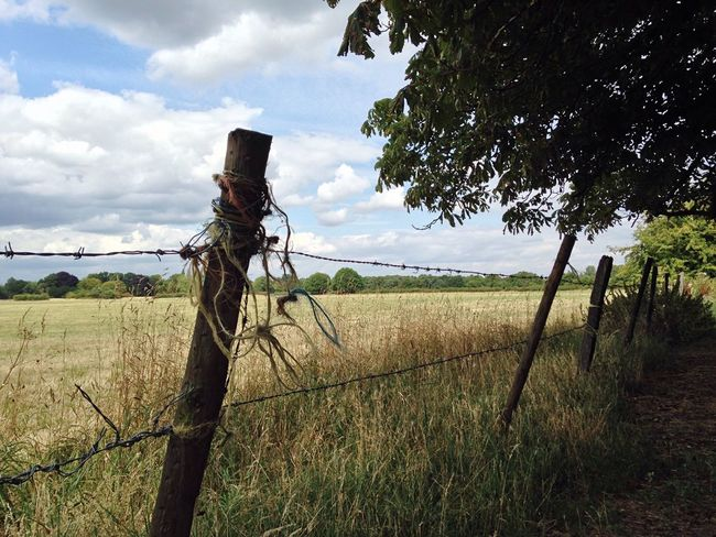 Lunchtime wandering Twine Fence Barbedwire Field England Grass Alternativelondon Trees Summer countryside