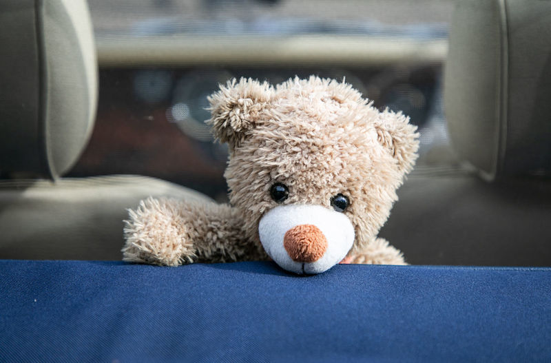 A teddy bear peaking out over the top of a modern open top sports car. Stuffed Toy Teddy Bear Toy Animal Representation Indoors  Representation Childhood Softness Furniture Close-up Domestic Room Day Still Life Brown Focus On Foreground Mammal Front View Seat Holding Teddy Sports Car Open Top Car Cute Cuddly Toy