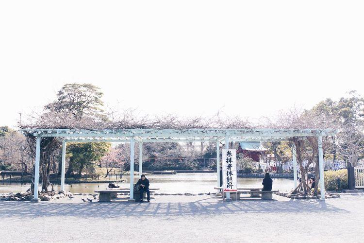 Vscocam Kamakura Tree Outdoors Day People Sky Sitting Adult Nature
