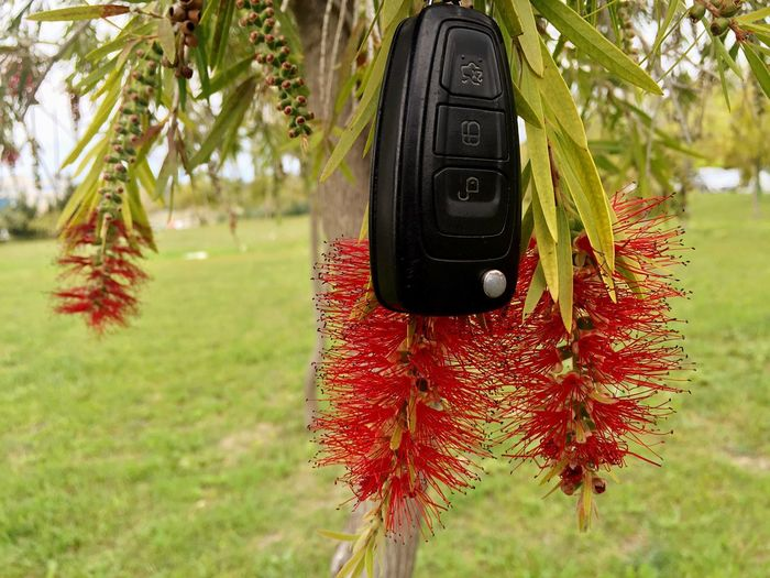 Close-up of car key hanging on tree