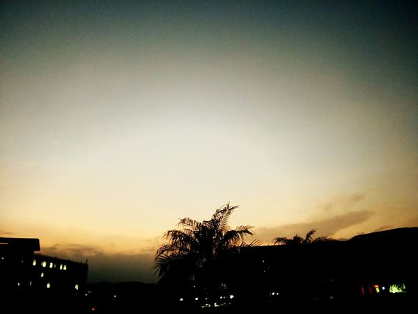 黄昏 Silhouette Tree Sunset Sky Outdoors No People Low Angle View Building Exterior