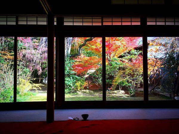 妙心寺 退蔵院 大休庵 茶席 京都 Kyoto Kyoto, Japan Autumn Colors Travel Destinations Autumn Leaves Kyoto Autumn Japanese Garden Relaxing Enjoying Life Autumn Hello World 紅葉