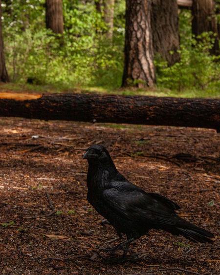 Shadow of a bird on a tree