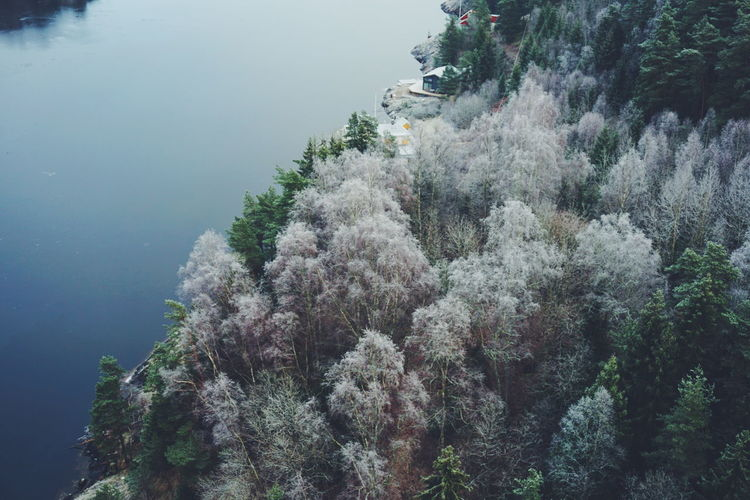 svinesund, sweden Nature Tree Water Beauty In Nature Growth No People Freshness Day Outdoors Svinesund Bru Svinesund Border Sweden Fog Rear View Low Angle View Looking Down Aerial View Frost Green Tranquility Nature Sweden Nature Cold Weather Growth Flying High Perspectives On Nature