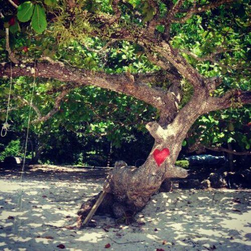 Trädet. Pangkor