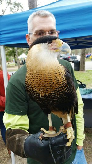 Caracara or Mexican Eagle. Its foot had been injured so in captivity. Food Texas Jesse Jones Nature Park Outdoors Day Nature Nature Day Eye Em Nature Lover Cute One Person People Close-up Popular Photos Birds CaraCara Animal Themes