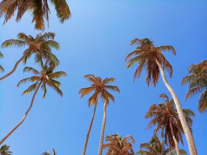 O tempo voa Tree Clear Sky Blue Palm Tree Sky First Eyeem Photo