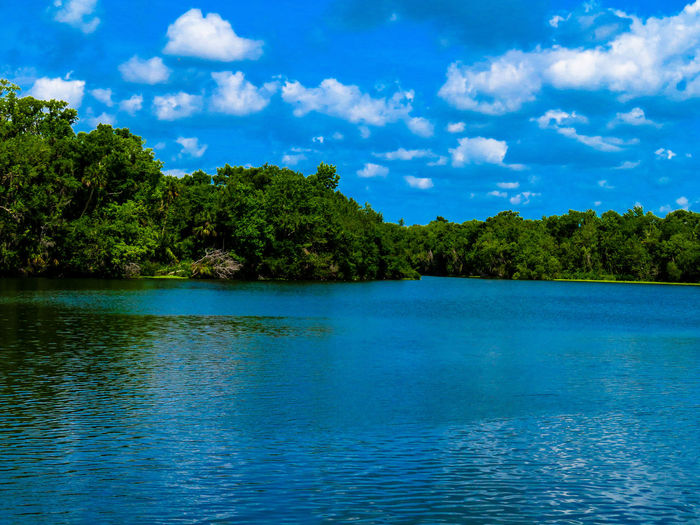 Springs lake Lake Springs Springwater  Florida Tree Water Blue Waterfront Forest Sky Cloud - Sky Idyllic Calm Shore Scenics