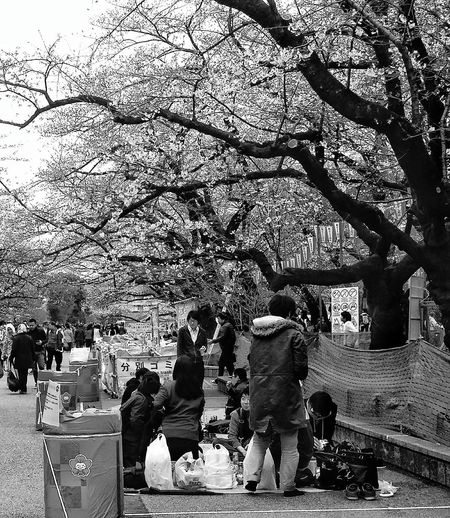 Ueno Park Tokyo Streetphotography Keeping It Clean Cherry Trees Cherryblossoms Tokyopark Eyeem Ueno Park Eyeem Streetphotography Tokyospring2016 Tokyouenospring2016 Trees EyeEm City EyeEm Gallery EyeEM Tokyo EyeEm Japan EyeEm Bnw Bnw Bnw_captures Bnw_worldwide Bnw_streetphotography Bnw_planet Bnw_life Bnw_collection
