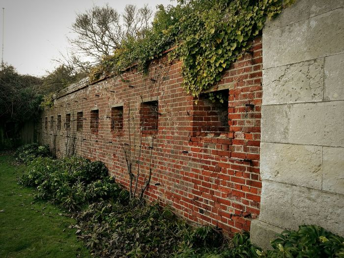 Bricks 🇬🇧🌍🍀 Brick Wall CreeperGreen Color Nature Outdoors Gardens Rose Garden Southsea Portsmouth Wintertime Portsmouthphotographer Streetphotography Adapted To The City EyeEmNewHere
