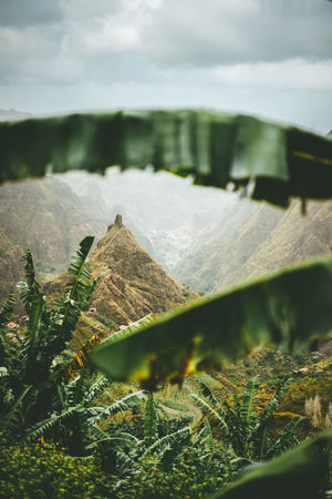 Mountain peak of Xo-xo valley visible throught the banana leaves frame down the valley. One of the best trekking route on Santo Antao island, Cape Verde. Cloudy weather. Banana Tree Cape Verde Moody Sky Beauty In Nature Cloud - Sky Day Environment Frame Green Color Growth Land Landscape Mountain Mountain Peak Nature No People Non-urban Scene Outdoors Plant Scenics - Nature Selective Focus Sky Tranquil Scene Tranquility Tree