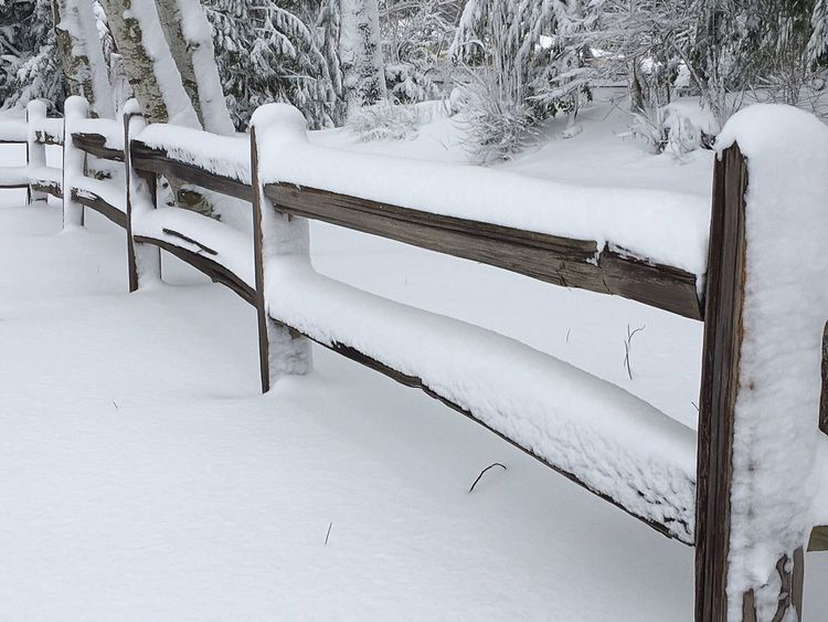 Walk through the park. Winter Snow Cold Temperature No People Frozen Outdoors Fence PNW Pacific Northwest  Wintertime Winter's Beauty Snowy Trees