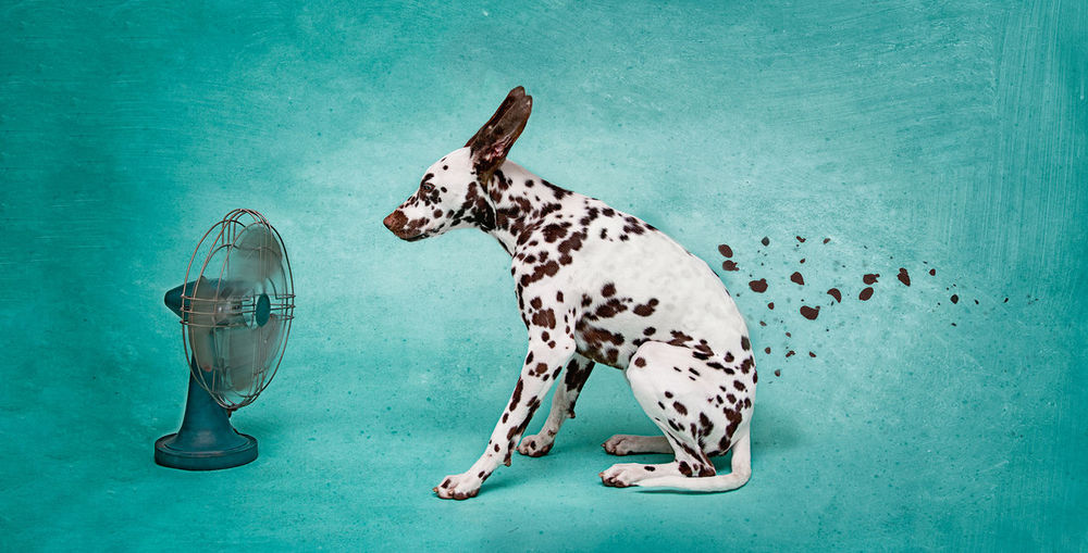 Digital Composite Image Of Electric Fan Blowing Dalmatian Spots Against Turquoise Background