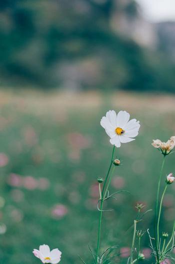 Spring Springtime Blooming Blossom Blurred Blurred Background Bokeh Filter Filtered Image Processed Image Flowering Plant Flower Freshness Fragility Focus On Foreground Selective Focus White Color