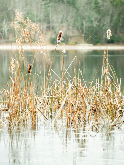 Happiness Cheerful Sunny Moments Of Happiness Pollen Pond Pastel Dreamy Scenics - Nature Outdoors No People Growth Focus On Foreground Tranquil Scene Grass Waterfront Day Nature Reflection Tranquility Plant Lake Water Peaceful Peace