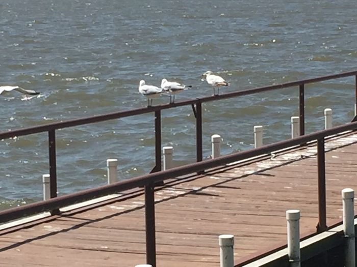 Water Railing Bird Nature Vertebrate Animals In The Wild Animal Wildlife Animal Group Of Animals Sea Seagull Architecture Animal Themes Sunlight Day High Angle View Built Structure No People Outdoors Flock Of Birds