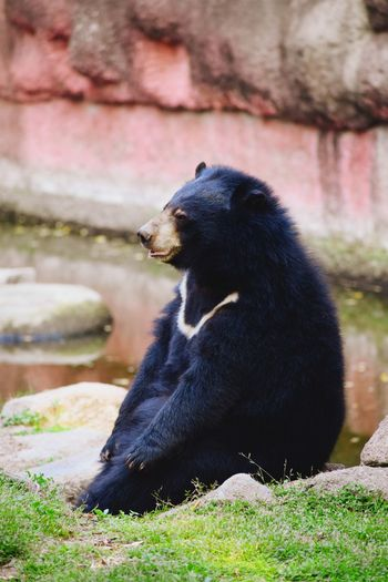 Animal Themes Animals In The Wild Animal Photography Sitting Bear Portrait Close-up Grizzly Bear HEAD EyeEmNewHere