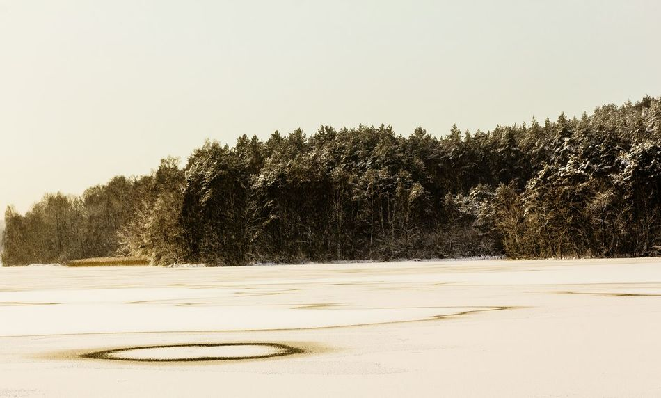 Forest Photography Tree No People Nature Snow Day Paintphotography  Background Beauty In Nature Winter Frozenlake Circle Pattern