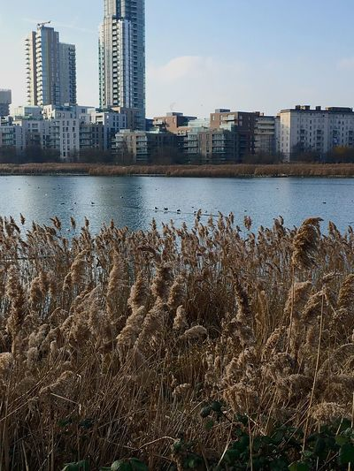 Woodberry wetlands City Architecture Water Sky Modern Urban Skyline Wetland Woodberry Beauty In Nature Reservoir