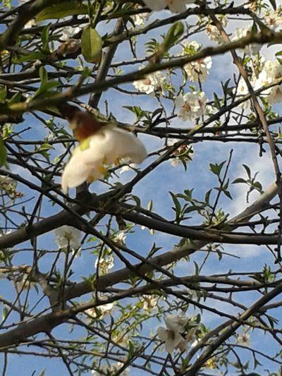 Flowerporn Flowers,Plants & Garden EyeEm Gallery Nature_collection EyeEm Best Shots-My World