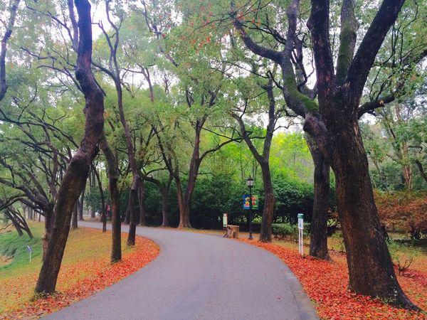华南植物园之晨