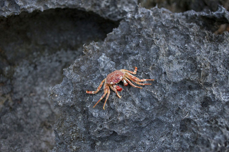 Animal Themes Animal Wildlife Animals In The Wild Beach Close-up Crab Crustacean Day Hermit Crab Nature No People One Animal Outdoors Sea Life Textured