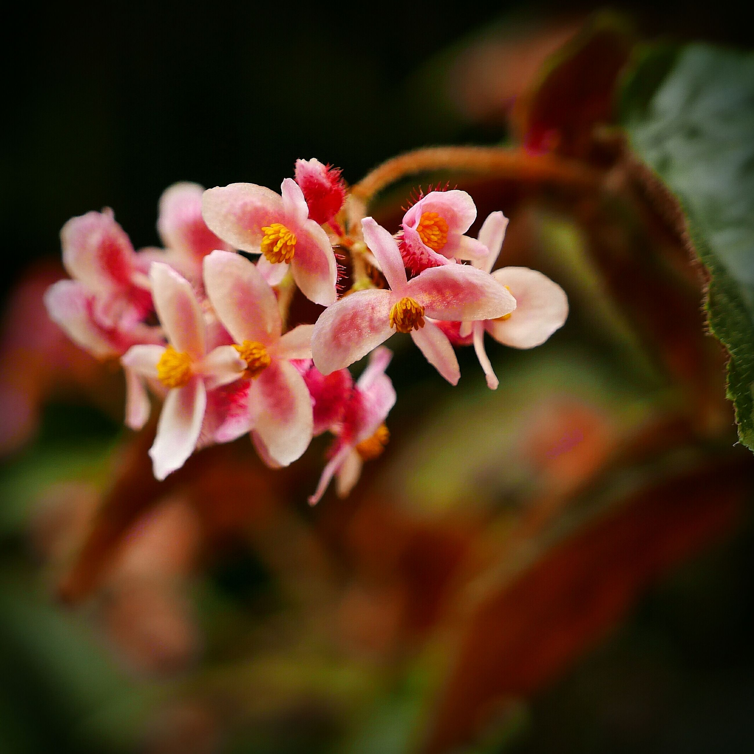 flower, beauty in nature, fragility, petal, nature, pink color, growth, plant, selective focus, close-up, flower head, no people, outdoors, freshness, day, blooming, tree