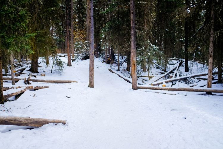 Canada Snow Winter Cold Temperature Nature Tree Tranquility Outdoors No People Beauty In Nature Forest Scenics Landscape Day
