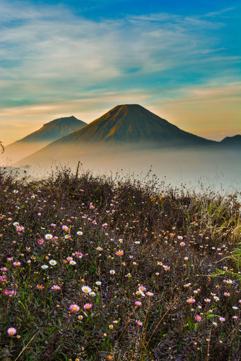summer Mount Flower Head Flower Tree Mountain Dawn Fog Uncultivated Flowerbed Poppy Wildflower Single Tree