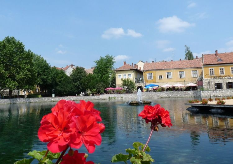 Red flowering plants by lake against building